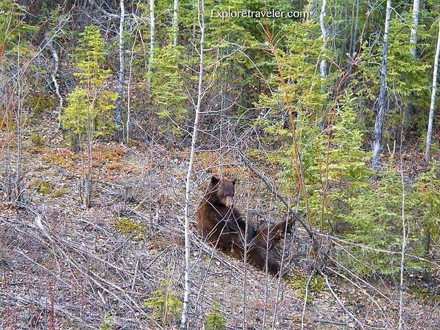 Tanana Valley State Forest Alaska
