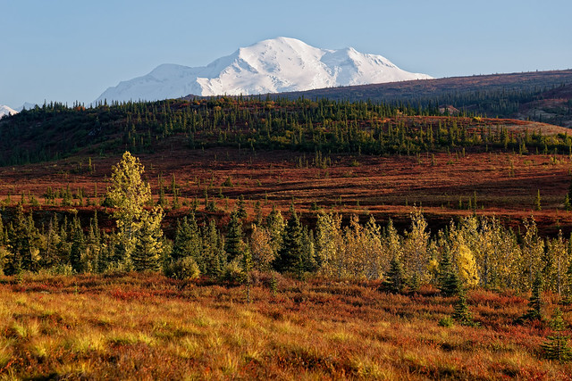 Denali Is Like Icing on a Cake for a Day in Alaska!