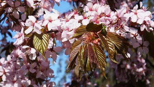 Springtime in Scotland 05