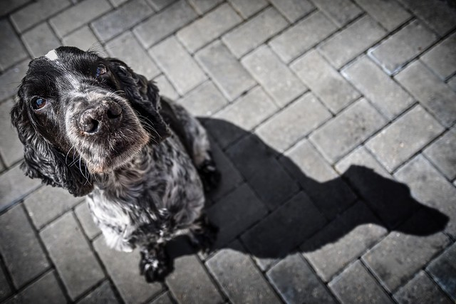 Oli and His Shadow