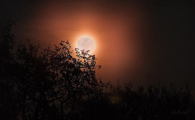 Pink Moon...