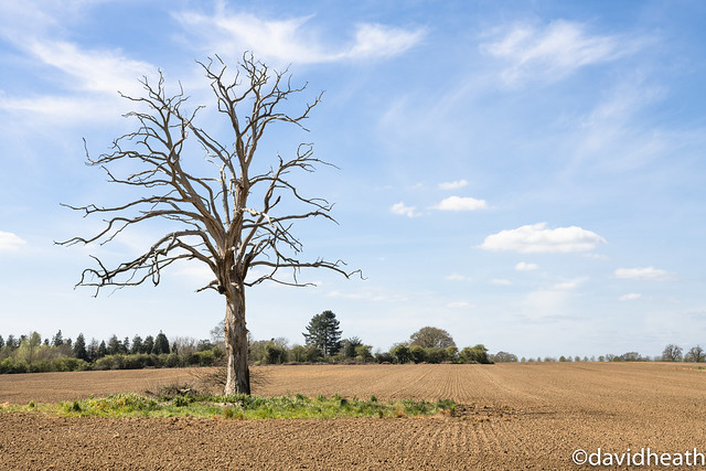 Tree in Isolation