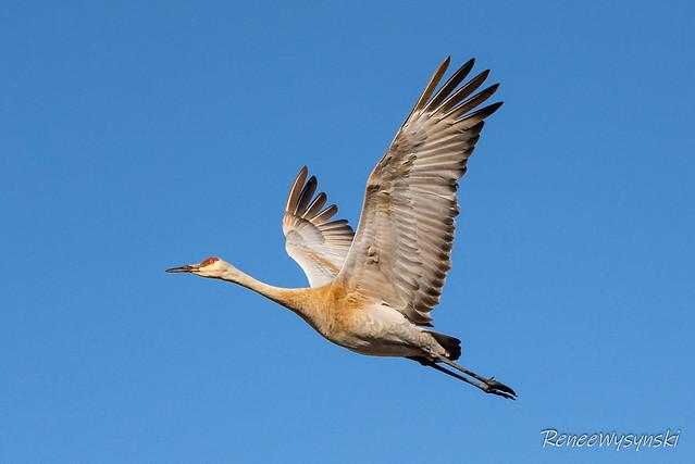 Birding - Apr 3 2020-40.jpg