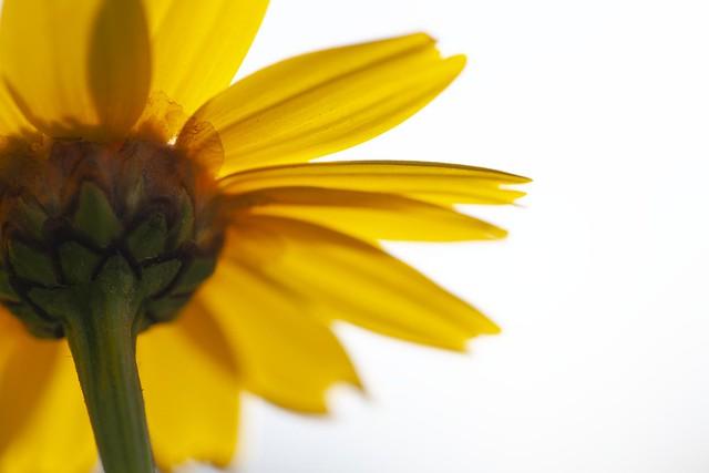 Quand y'aura plus de fleurs, on photographiera autre chose ...