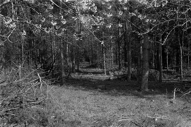 Through the woods - film