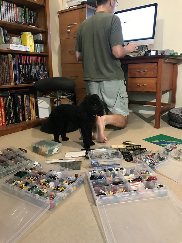 Scully helping with Lego