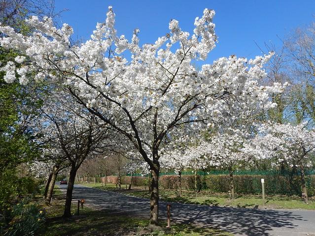 Blossom Preston Crematorium b