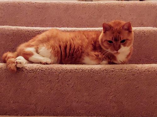 Odilia Harmon-Gustav one-armed cat