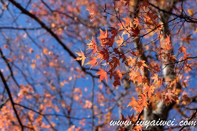 japan autumn 2019 (6)