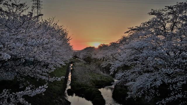✪ご近所の五条川の夕暮れ
