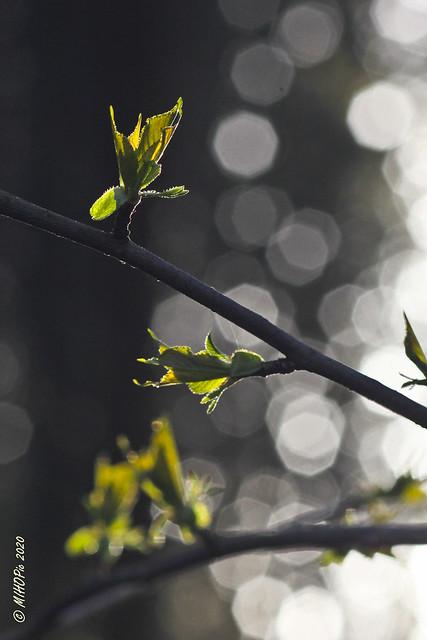 Überall im Wald frisches Grün