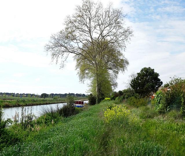 Ce côté sauvage du canal du Midi que j'aime tant.......
