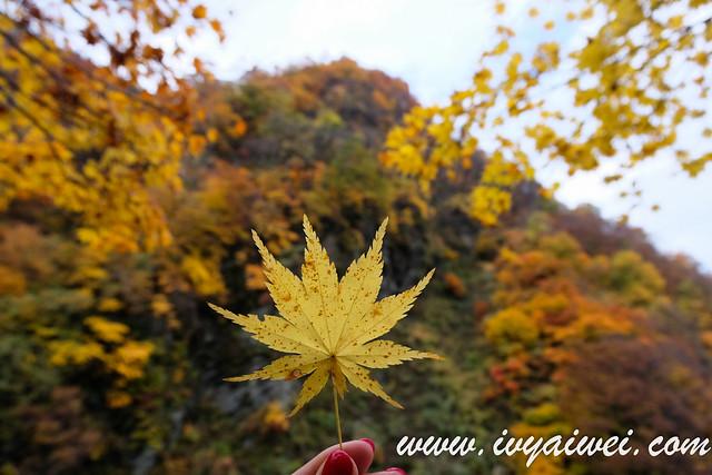 japan autumn 2019 (15)