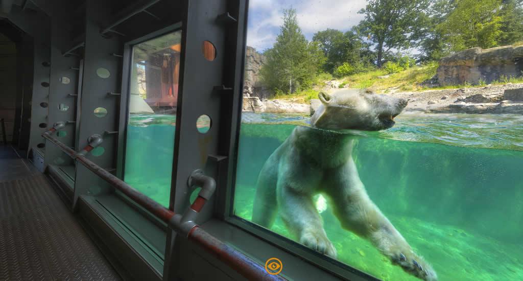 Virtuele citytrip Hannover, Hannover Adventure Zoo (beeld via Hannover Living, HMTG) | Mooistestedentrips.nl