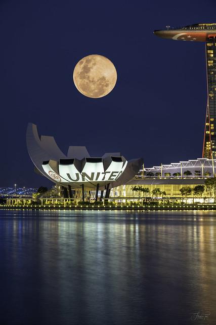 Pink Moon #SGUnited #STAYHOME