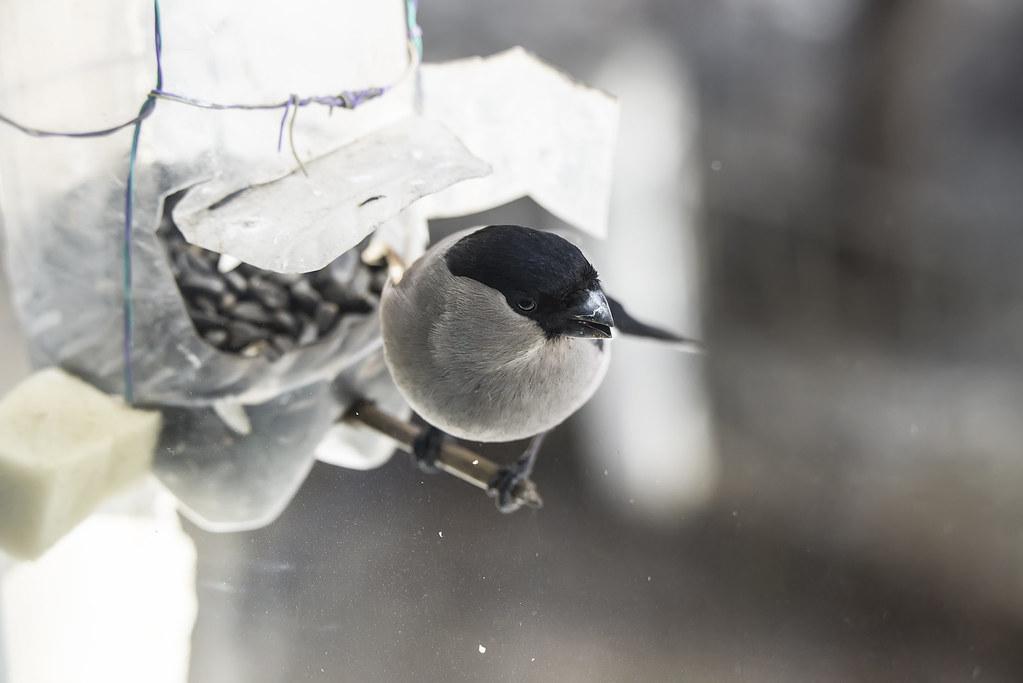 Дикие птицы в городе