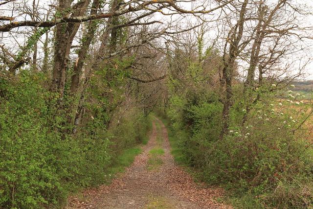 L'entrée du bois mystérieux...