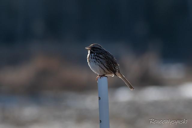 Birding East- Apr 5 2020-3-Edit.jpg