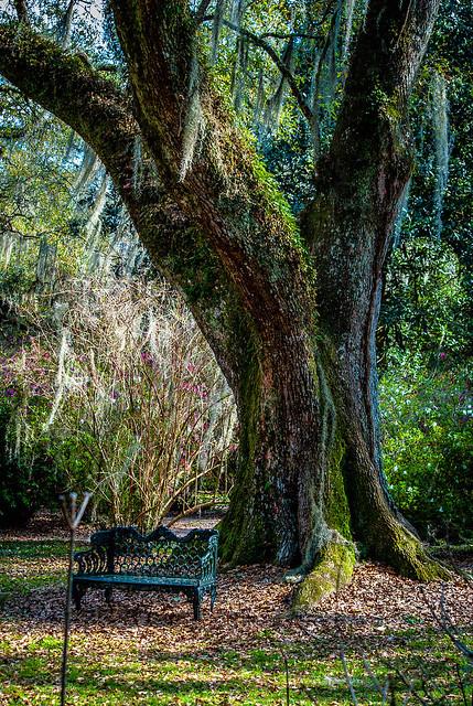 Seat in Oak Shade