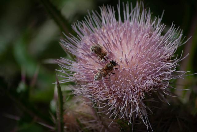 Bees Bathing in Pollen