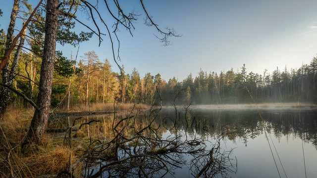 The Lake in the woods - Der See im Wald