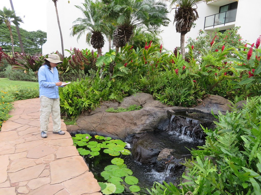 starr-200117-7343-Nymphaea_sp-in_water_feature_with_Kim_surveying-Wailea_Beach_Resort-Maui