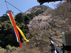 Senkoji - Prayer flag and cherry blossoms. Peak of Arashiyama in the background.