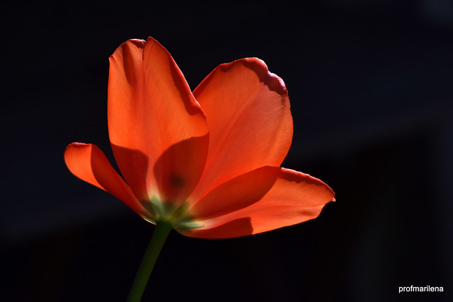 DSC_3879 illumination in my garden