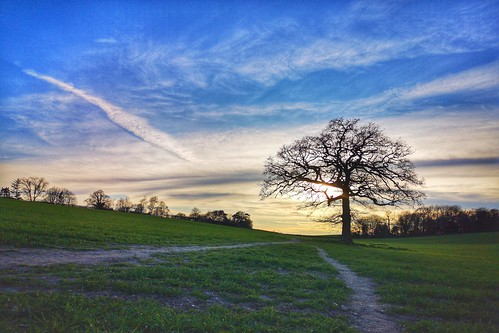 tree field footpath evening sunset sky silhouette nature huaweimobile huaweip20pro vapourtrails