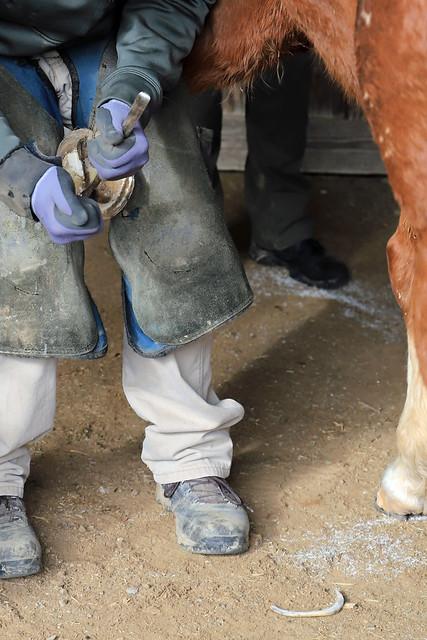 Horse Farrier - Animal Healthcare