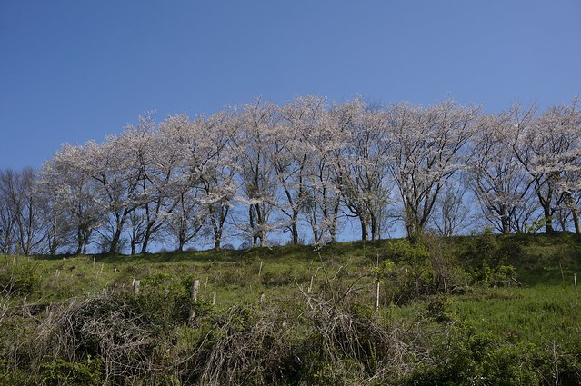 禅が峰神社から高尾城址公園へ