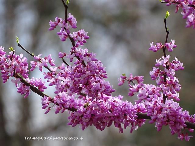 April Garden at FromMyCarolinaHome.com