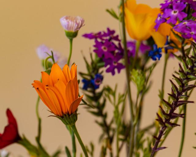 Roadside Flowers in a Vase