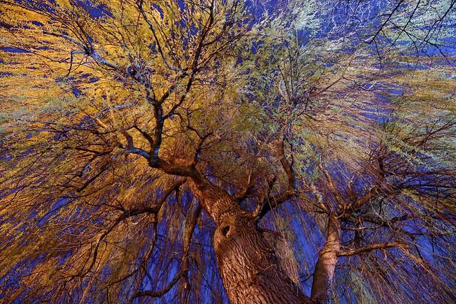 The Illuminated Tree