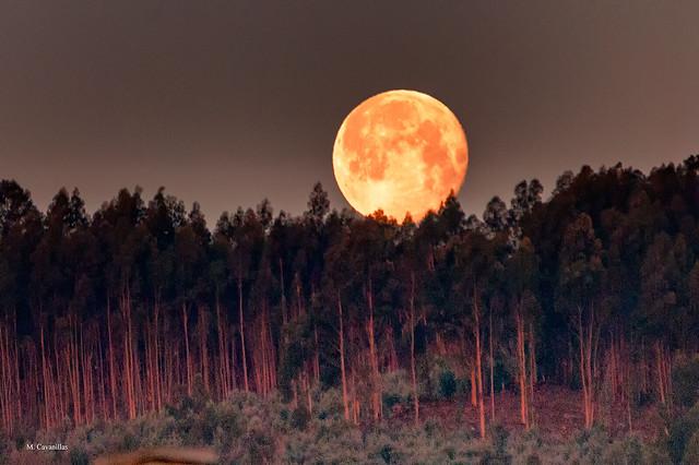 El ocaso de la luna