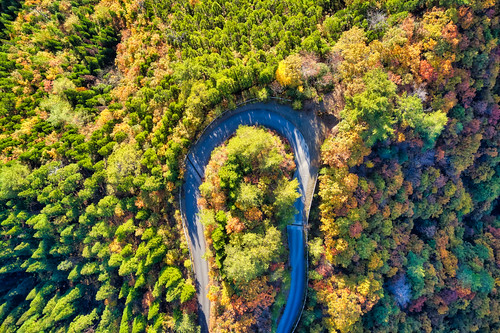 road way forest autumn fall leaf leaves foliage maple mountain hill valley takashima shiga kansai japan season seasonal abstract aerial birds eye drone natural nature landscape scenery background backdrop material fly flight high angle top view down picturesque discovery journey colorful multicolored beautiful dense sunlight sunshine tree sunrise dawn daybreak