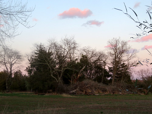 sunset trees whitehouse station nj clouds pink readington