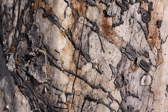 Semi-abstract tree trunk textures