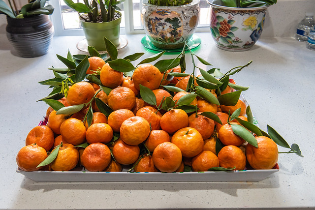 Mom's Harvest of Tangerines from Home