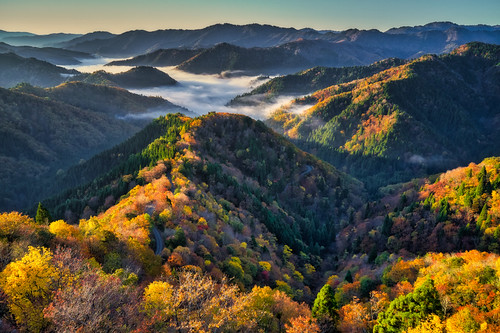 onyudani onyu valley autumn fall leaf leaves foliage maple sea clouds mountain takashima shiga kansai japan season november aerial birds eye drone natural nature landscape scenery background material travel tourism trip sightseeing fly high angle prospect view scenic scene picturesque adventure journey colorful multicolored beautiful famous tourist attraction place sunrise