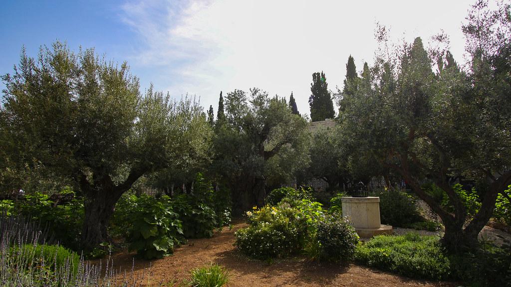 """The Garden of Gethsemane   """"When Jesus had spoken these word…   Flickr"""