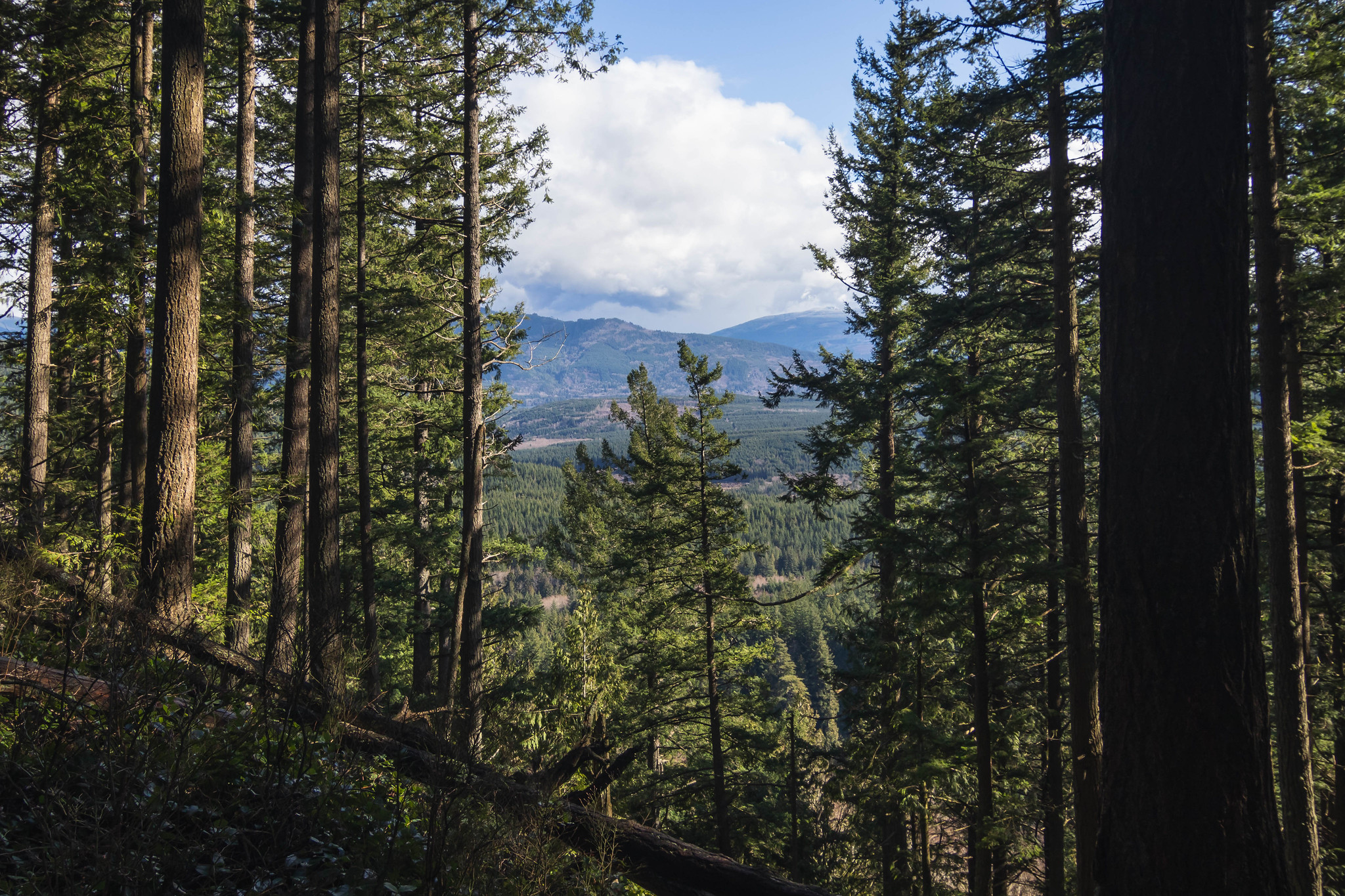 Some views on Chucknut Mountain