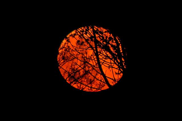 Rising Orange Moon 08/04/20