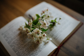 Spring flowers on old book indoors. | by shixart1985