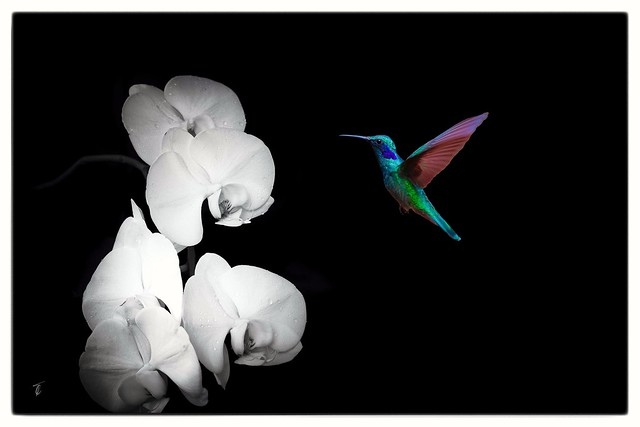 And so the hummingbird came to dry the orchid's tears... Getting creative. Stay 🏡, stay safe.