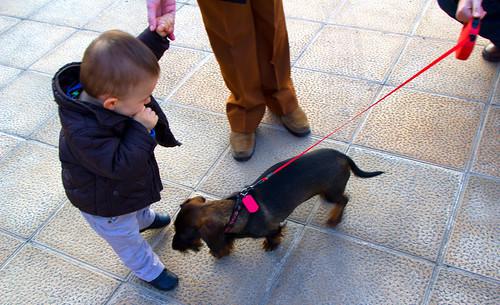 FIRMA para Igualar los derechos de la infancia con los de los perros en el confinamiento COVID-19