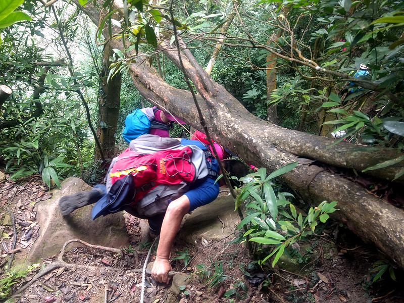 Crawling underneath a fallen tree on the trail is very common when hiking in Taiwan