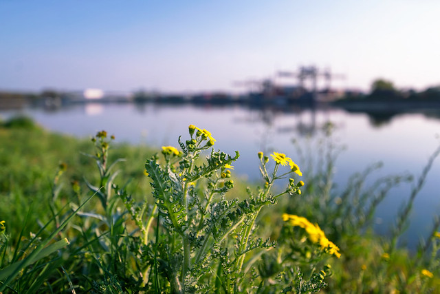 Spring at the harbor | SONY ⍺7RII & Tamron SP 15~30mm ƒ/2.8 Di VC USD