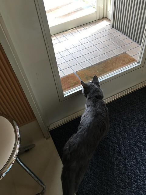 Bonkers Exploring His Territory 2
