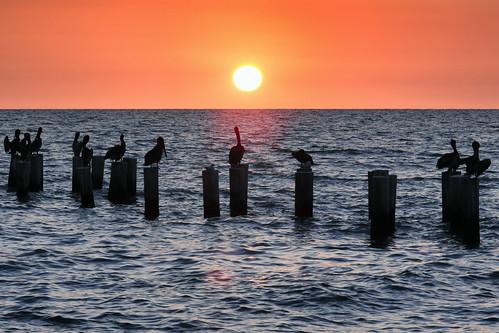 usa florida floride naples naplesbeach sunset coucherdesoleil sea borddemer mer seascape seaside canonef70200mmf4lisusm canoneos6d pelican